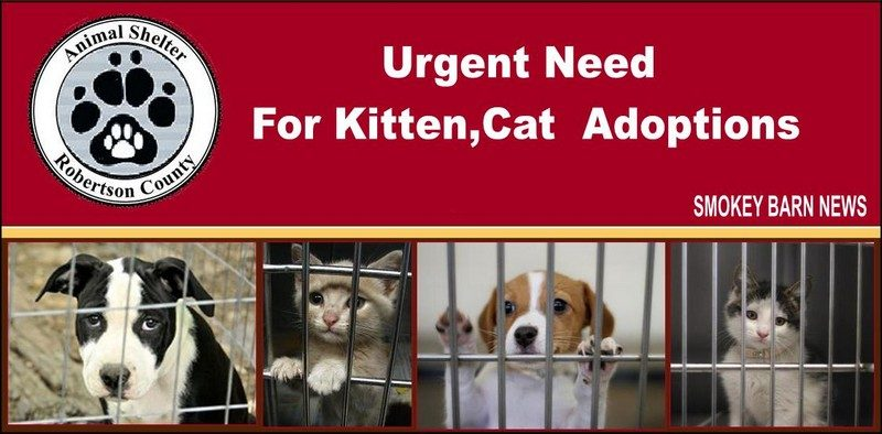 RC Animal Control urgent adoptions needed