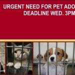 "Greenbrier Animal Control Says; ""Urgent! Adoptions Needed"""