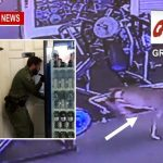 Deer Gets Locked In Womens Bathroom At Greenbrier Quik Fit