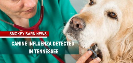 Contagious Canine influenza Detected In TN (Can Affect Cats)