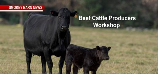 Beef Cattle Producers Workshop & Lunch Set For March 9 (RSVP)