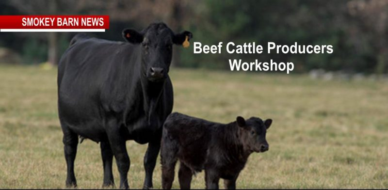 FREE Beef Cattle Producers Workshop & Lunch March 9 (RSVP)